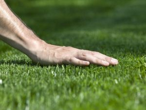 entretien pelouse et gazon