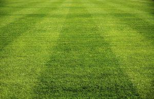 comment tondre sa pelouse guide pratique pour l 39 entretien de la pelouse. Black Bedroom Furniture Sets. Home Design Ideas
